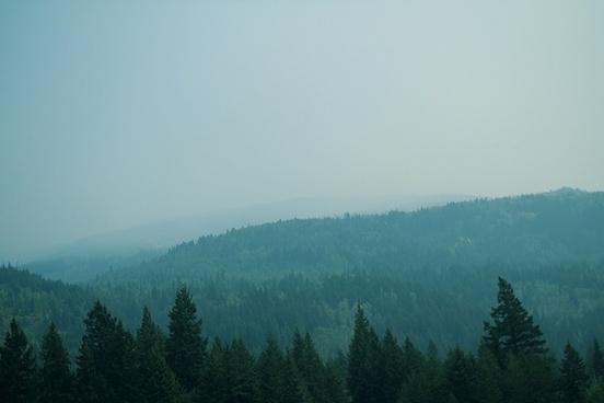 autumn dawn fall fog forest haze landscape mist