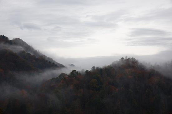 autumn dawn fall fog forest landscape mist morning