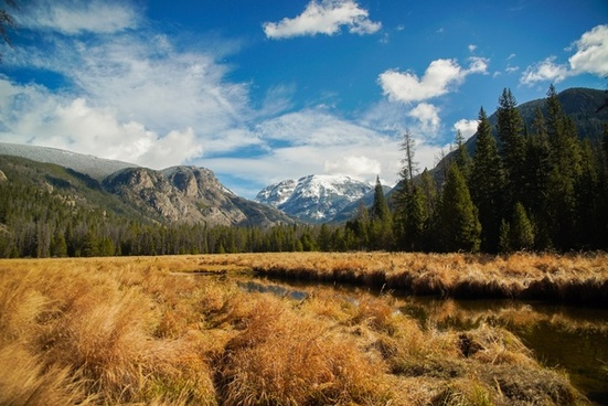 autumn daytime environment fall forest grass hill