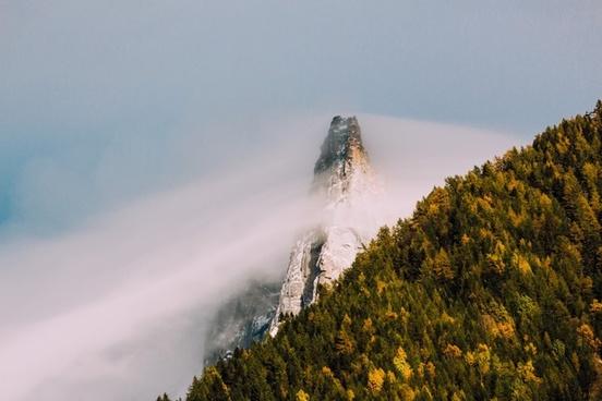 autumn daytime fall fog forest landscape light