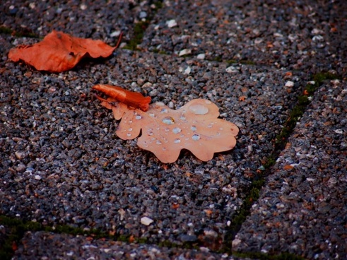 autumn dew leaves