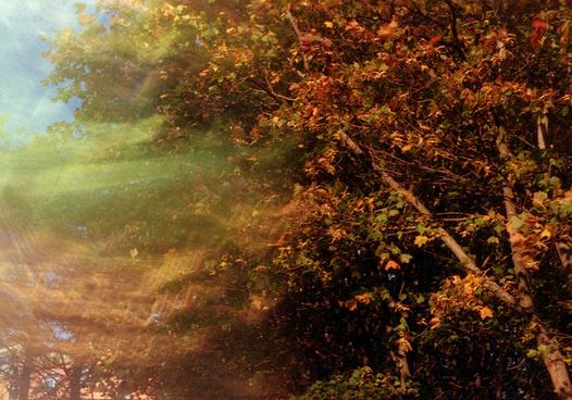 autumn double exposure