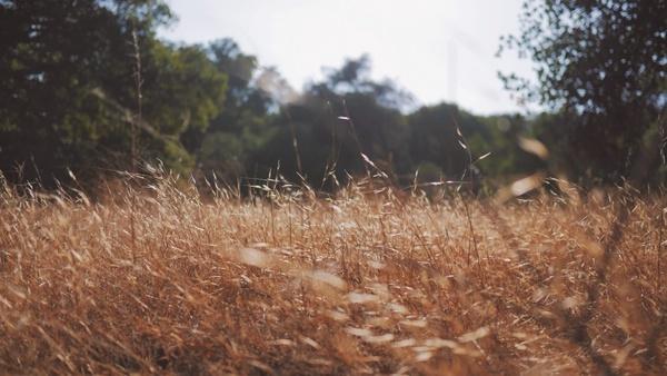 autumn dry fall field forest golden grass landscape
