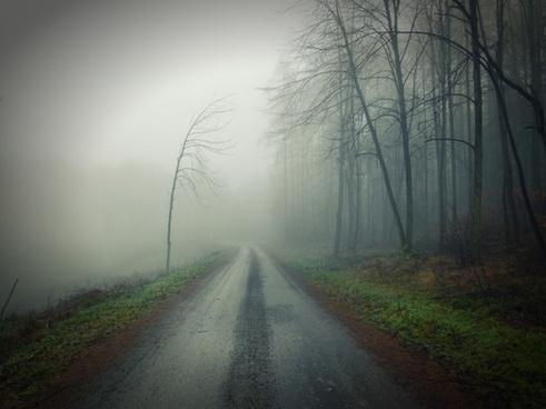 autumn eerie fall fog foggy forest haze landscape
