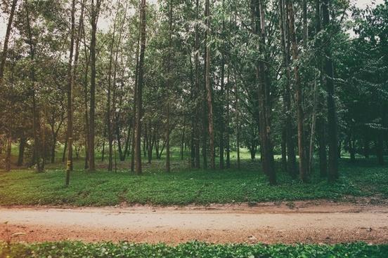 autumn environment fall forest grass landscape light