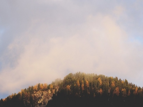 autumn evening fall fog forest landscape light mist