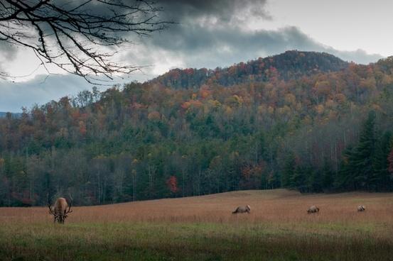 autumn fall fog forest grass grassland hill