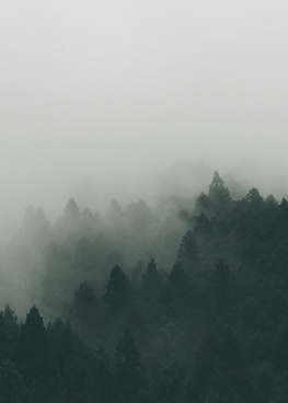 autumn fall fog forest haze landscape mist misty