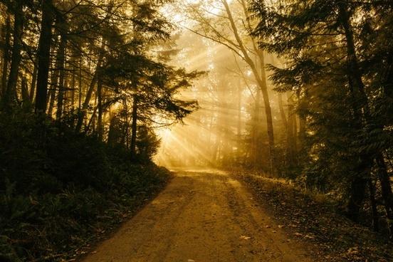 autumn fall fog forest landscape leaves light