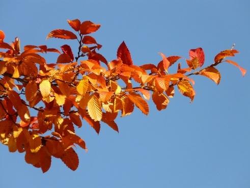 autumn forest tree