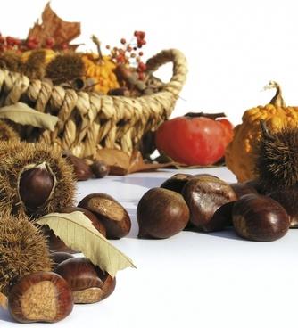 autumn fruit chestnuts