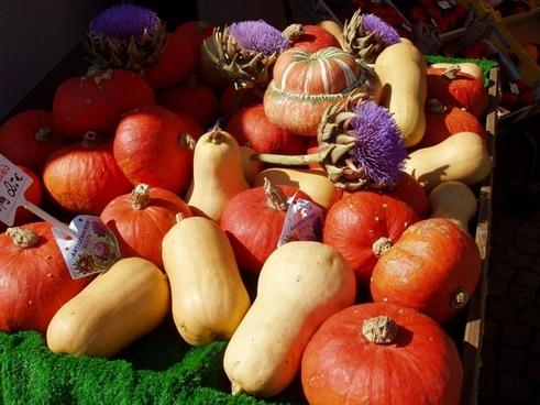 autumn golden autumn pumpkins halloween