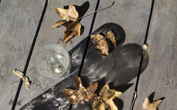 autumn in my backyard