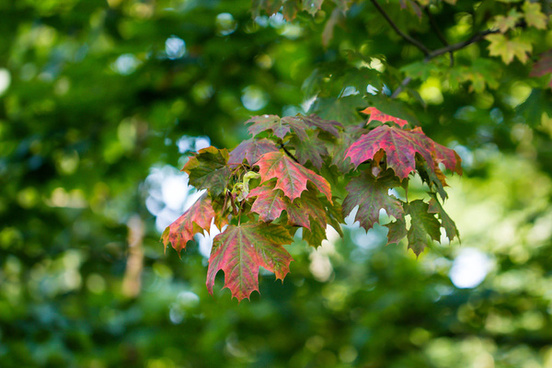 autumn is on its way