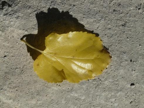 autumn journal poplar leaf
