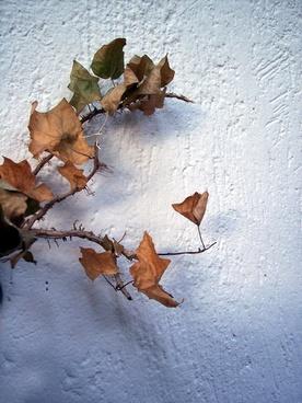 autumn leaf autumn tree