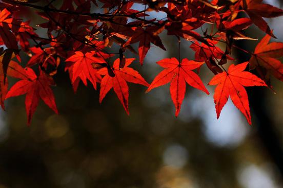 autumn leaf color in garden ueno park tokyo japan
