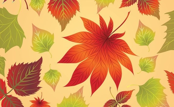 autumn leaves background closeup colorful decoration
