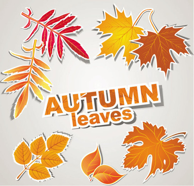 autumn leaves design elements vector