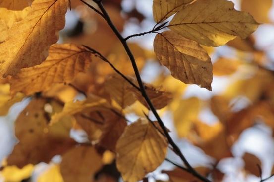 autumn leaves fall color