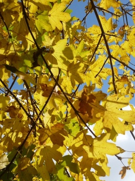 autumn leaves october