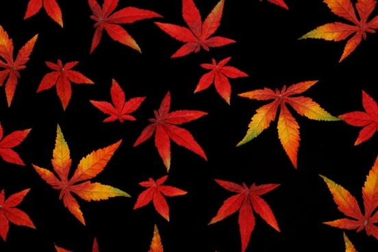 autumn leaves on black
