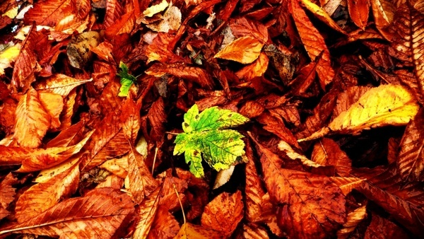 autumn leaves seasons