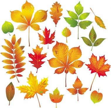 autumn leaf icons colorful bright shapes design