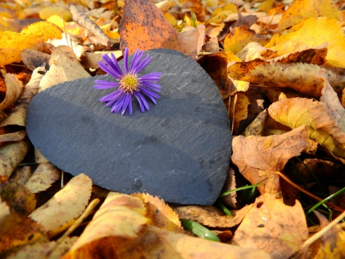 violet flower on yellow dried leaves