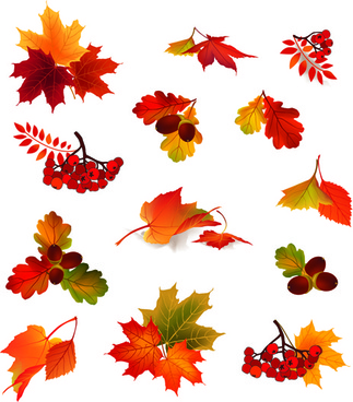 autumn leaves with fruit vector