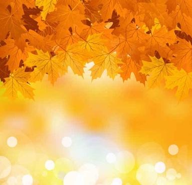 Autumn maple leaf background