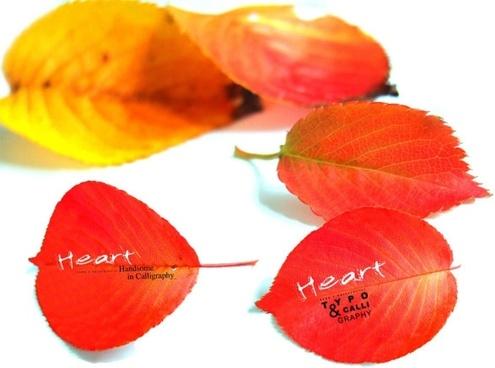autumn red deciduous series psd 3