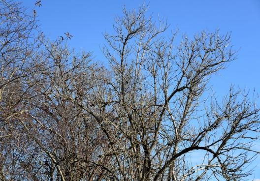 leafless tree in autumn