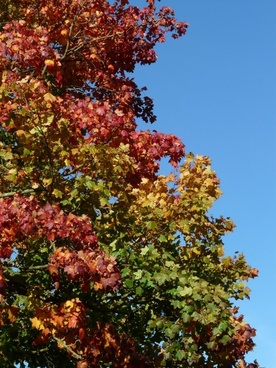 autumn tree leaves coloring