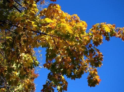 autumn tree sky