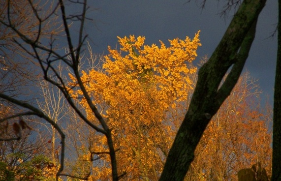 autumn trees and threatening clouds