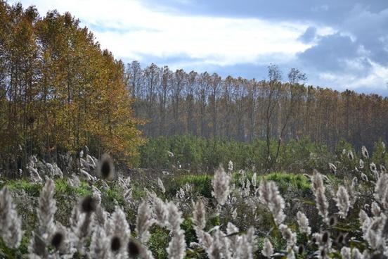autumn trees autumn leaves