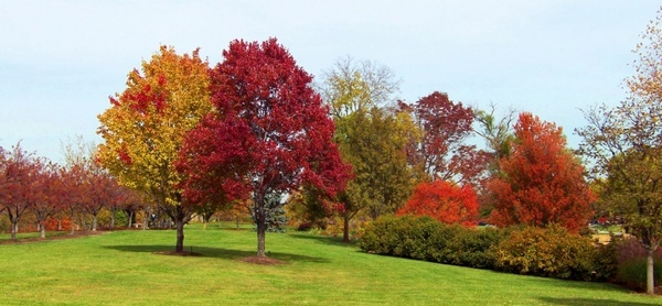 autumn trees in a park