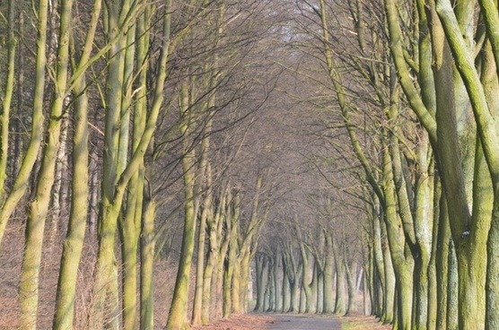 avenue tree-lined avenue forest path