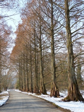 avenue tree-lined avenue redwood avenue