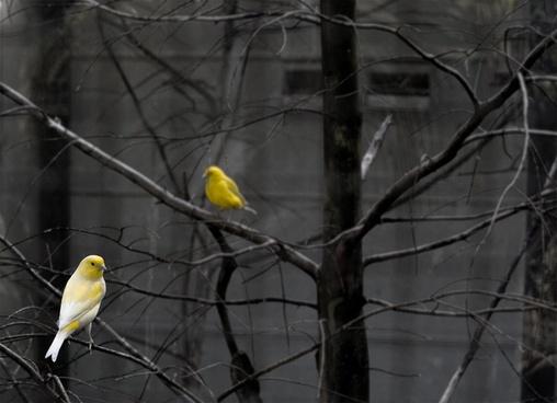 avian bird branch city cold environment festival