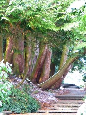away thuja thuja trees