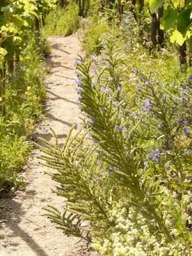 away trail path