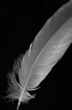 b and w feather