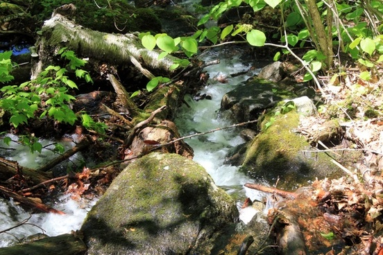 babbling brook in the adirondack mountains new york