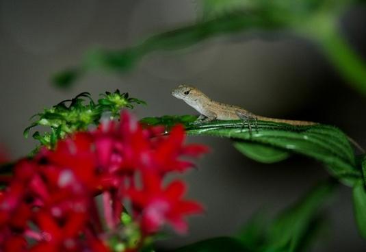 baby anole lizard