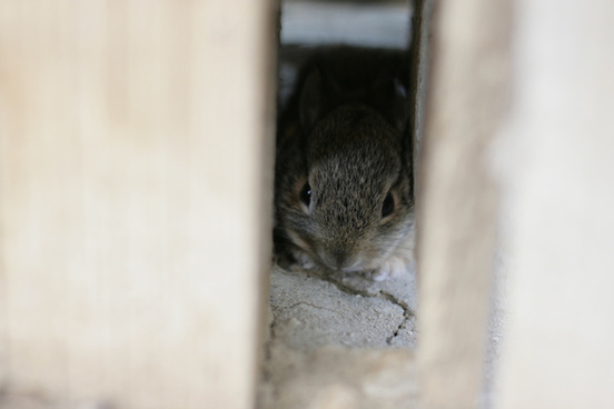 baby bunny in the fence