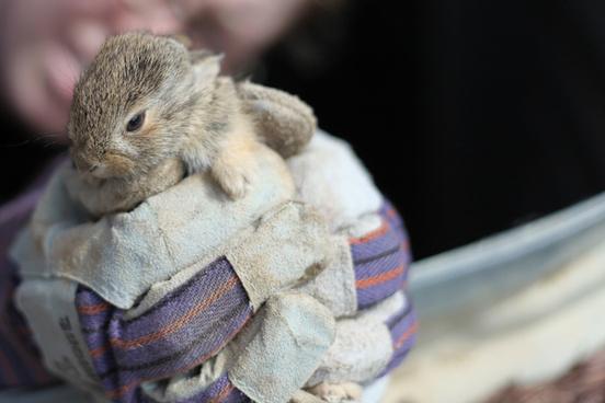 baby bunny rescue 2