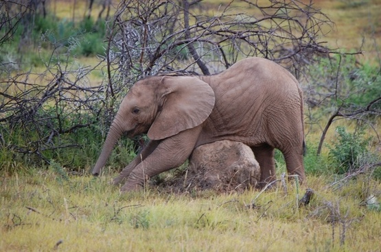baby elephant wildlife reserve elephant south africa