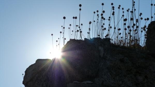 back light silhouette plant